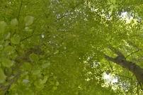 Blätterhimmel 120dpi DSC_0180